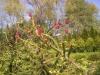zahrady004